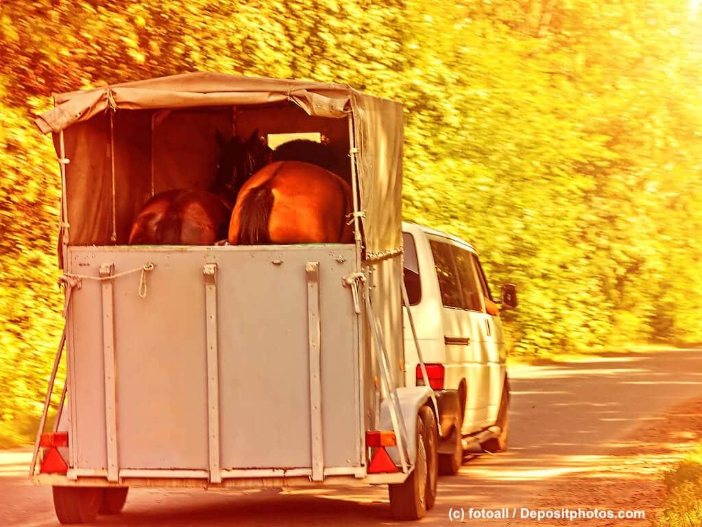 Welche Versicherung greift beim Unfall von Pferden