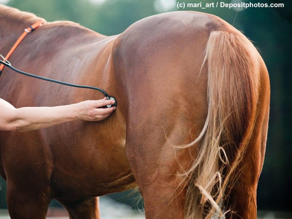 Pferdelebensversicherung für tragende Stuten