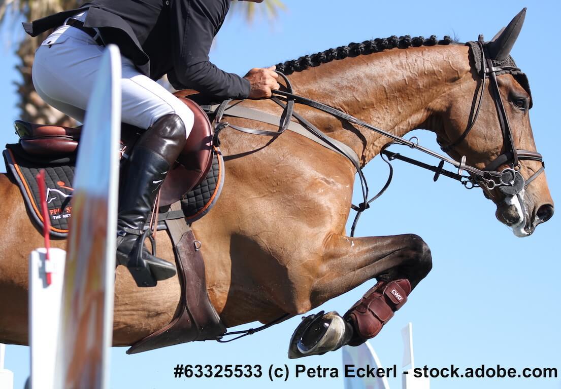 Pferdelebensversicherung für Sportpferde