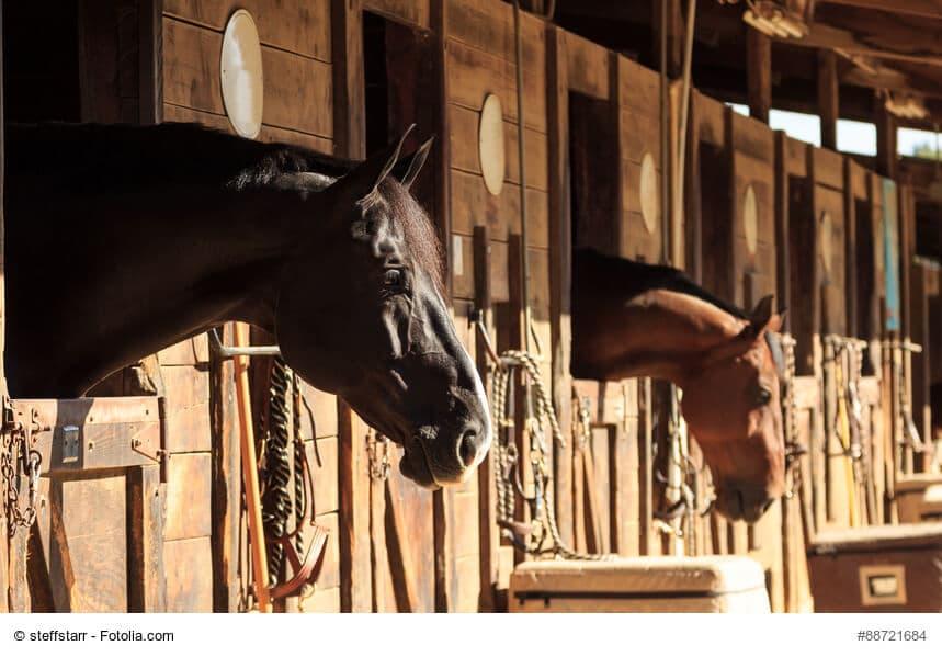 Welcher Pferdestall passt hängt von ganz persönlichen Vorstellungen ab