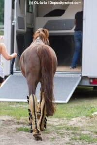 Pferdetransportversicherungen im Vergleich