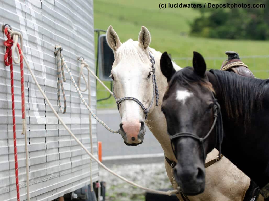 Pferde richtig versichern- die Unterschiede