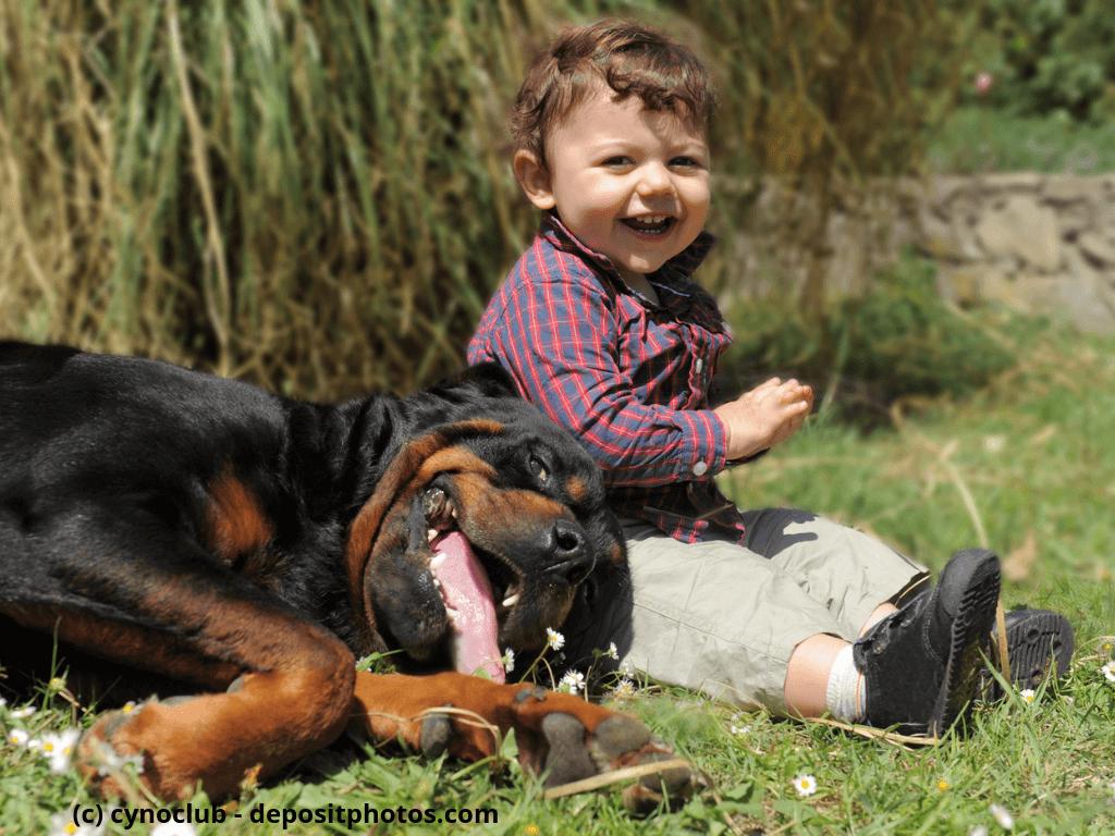 Portrait von einem reinrassigen Rottweiler und kleiner Junge im Gras