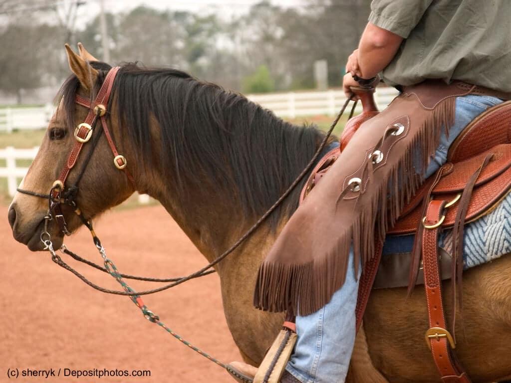 Quarter Horse Steckbrief