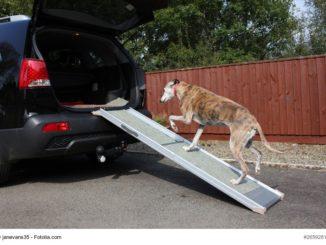 Auto und Treppenhilfen für Hunde