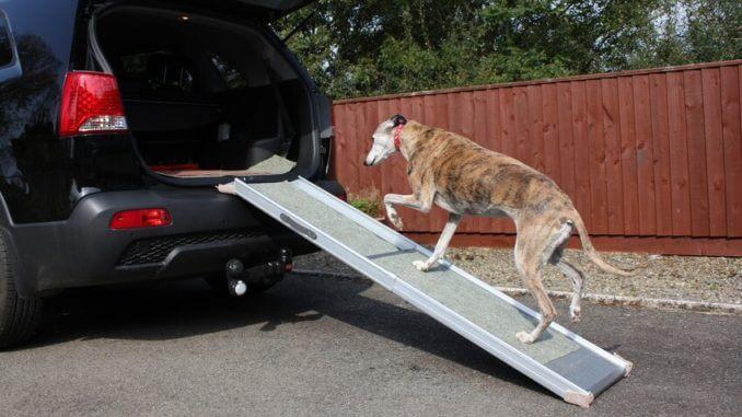 treppenhilfen f r hunde gibt es mehr au er rampen. Black Bedroom Furniture Sets. Home Design Ideas