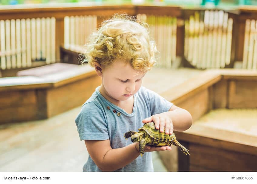 Kleinkind im blauen Shirt und Locken hält eine Schildkröte in seinen Kinderhänden