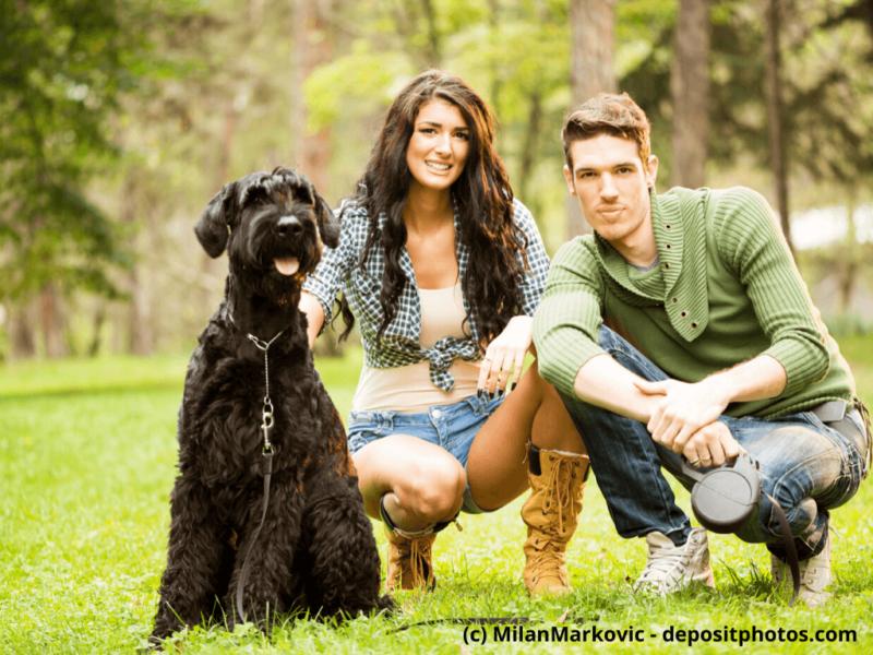 Riesenschnauzer mit jungem Paar auf der Wiese