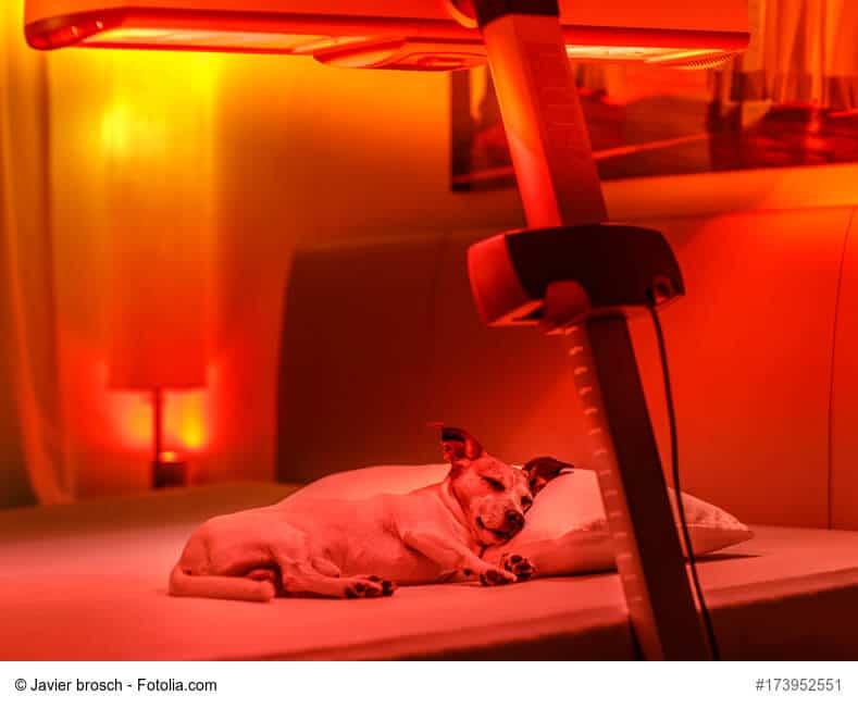 Kleiner Hund liegt unter der Rotlichtlampe