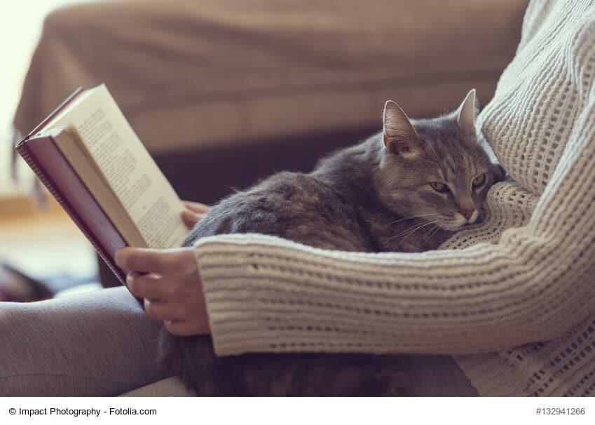Entspannung und Ruhe dank Katze