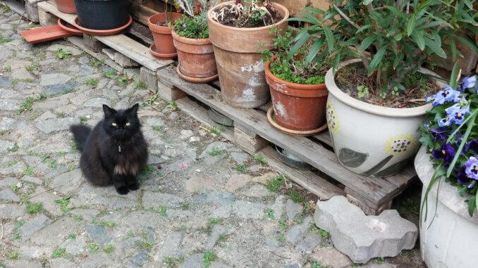 Schwarze Katze vor Blumentöpfen