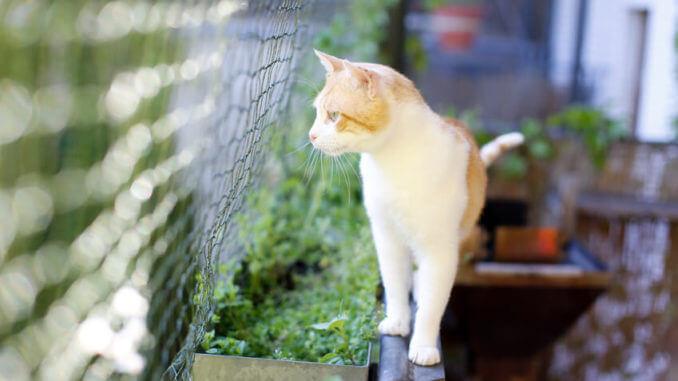 So gestaltest Du deinen Balkon Katzensicher