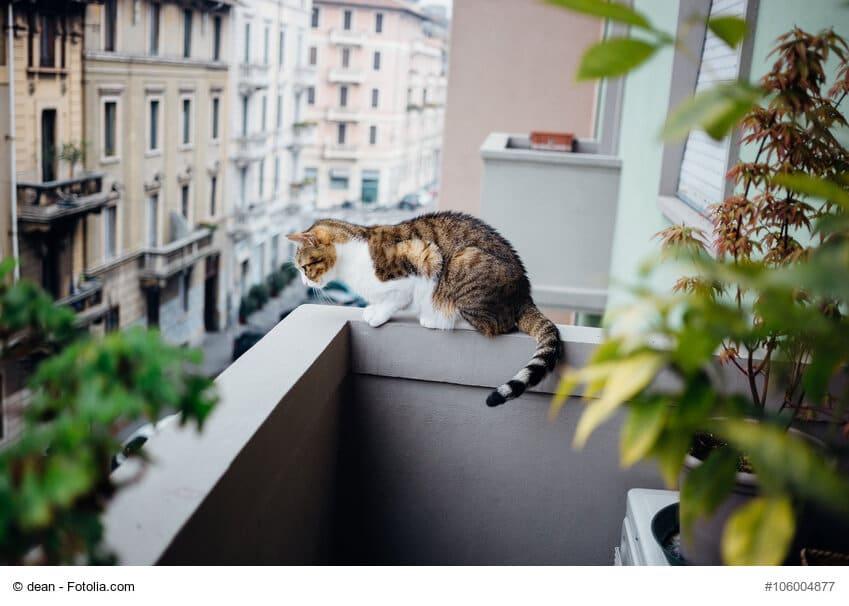 Katze auf nicht gesicherten Balkon