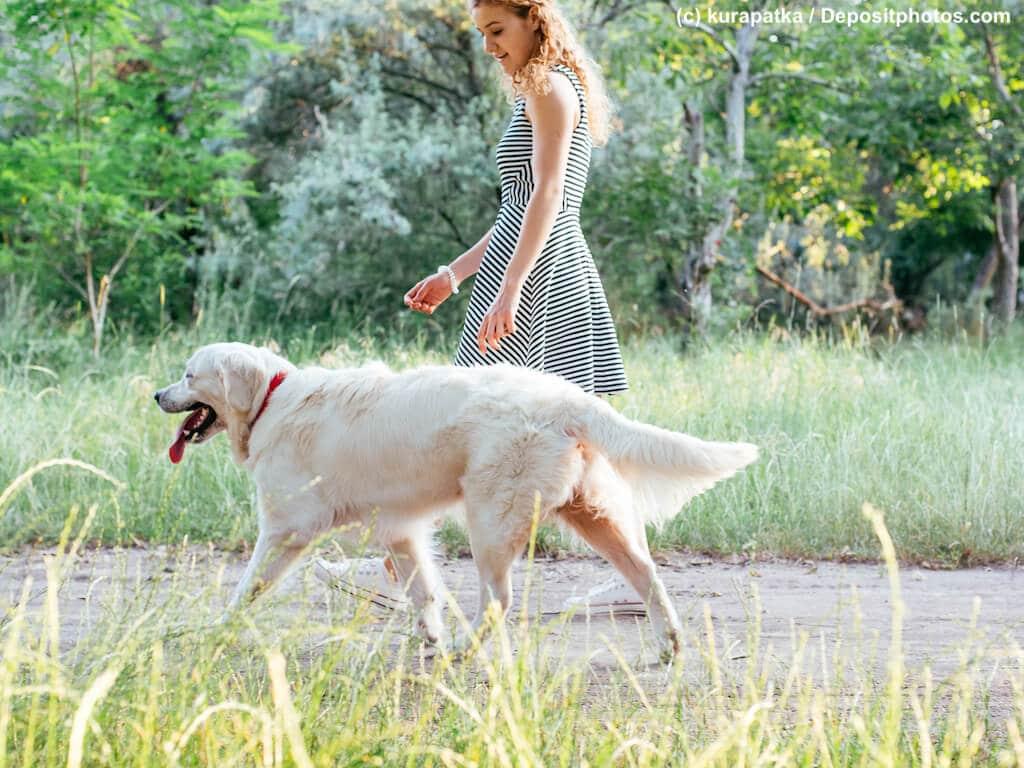 Spaziergang eines Golden Retriever mit seinem Frauchen in einem Park