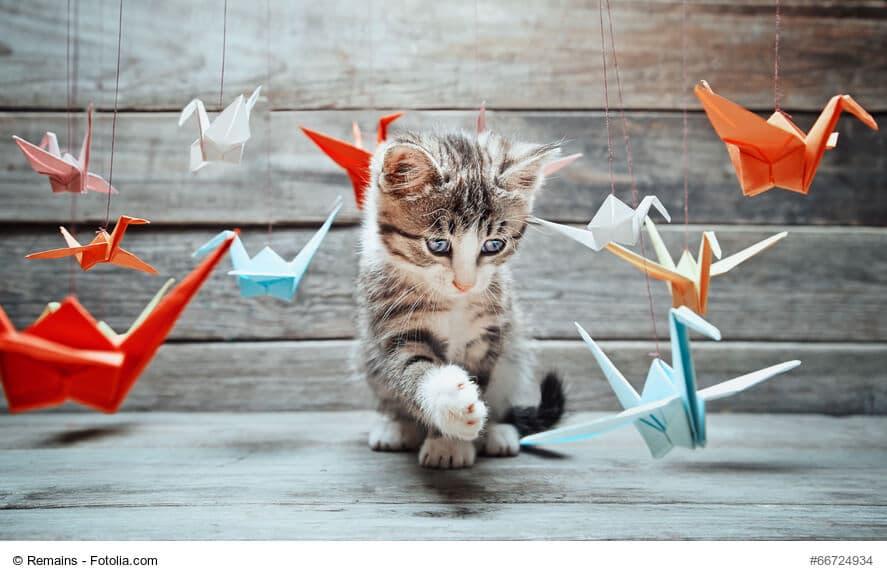 Katzenbabys - spielend zum Superheld