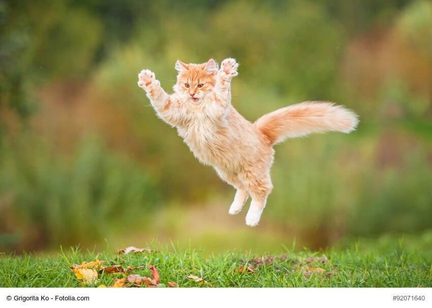 Die unglaublichen Fähigkeiten der Katze
