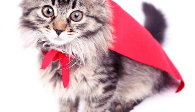 Superhelden Katzen