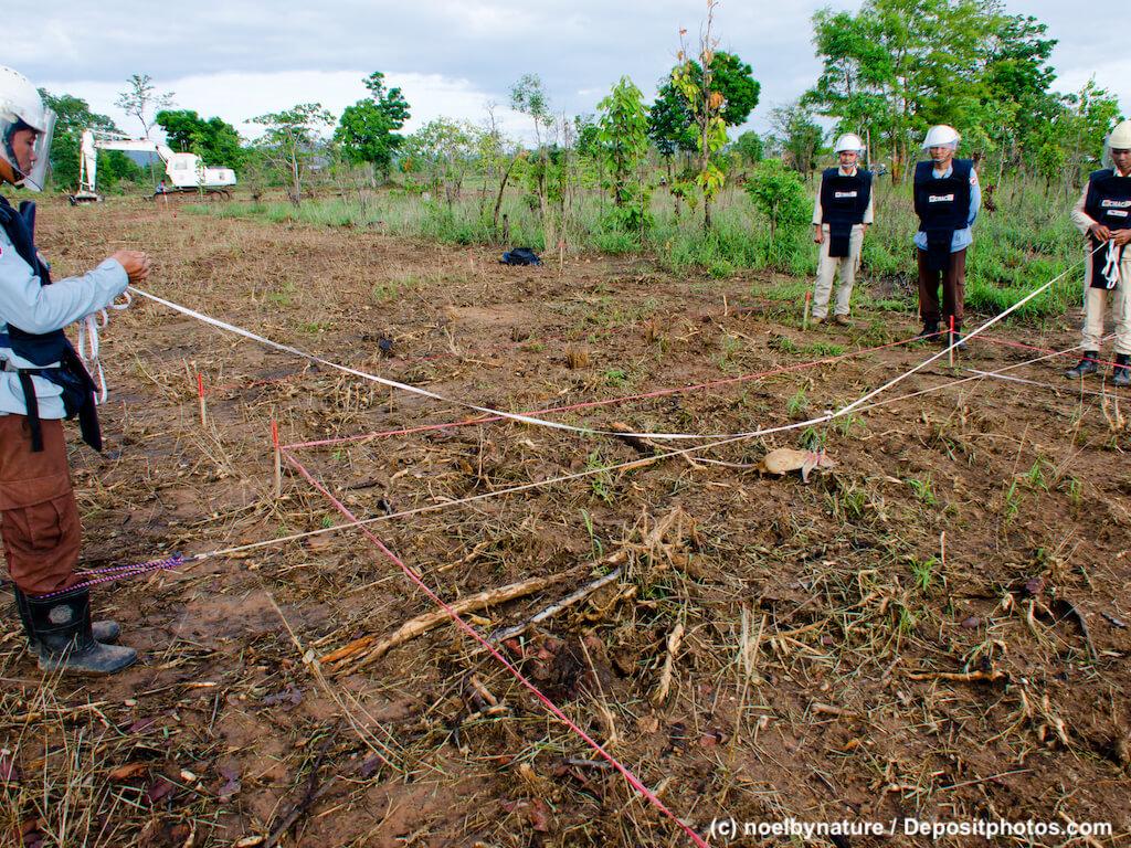 Ratte sucht auf abgegrenztem Gebiet nach Landminen