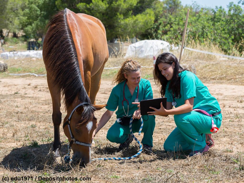 Tierarzt Pferde Informationen