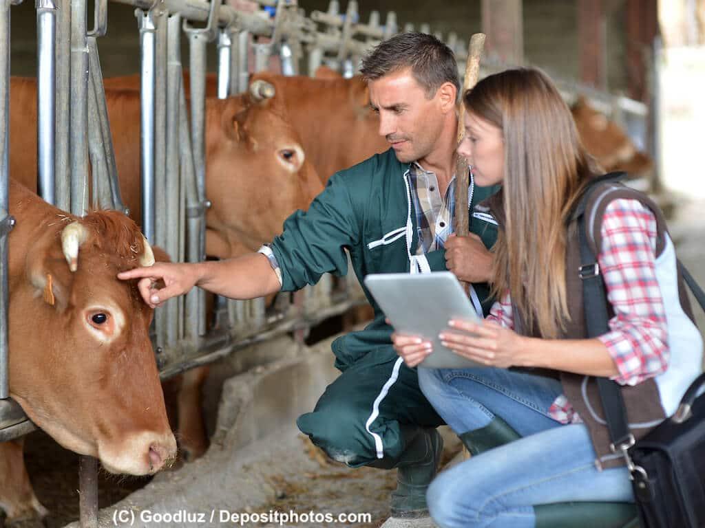 Landtierarzt ein Beruf mit großen Tieren