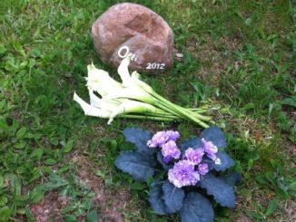 Tierbestattung im Garten mit Gedenkstein und Blumen