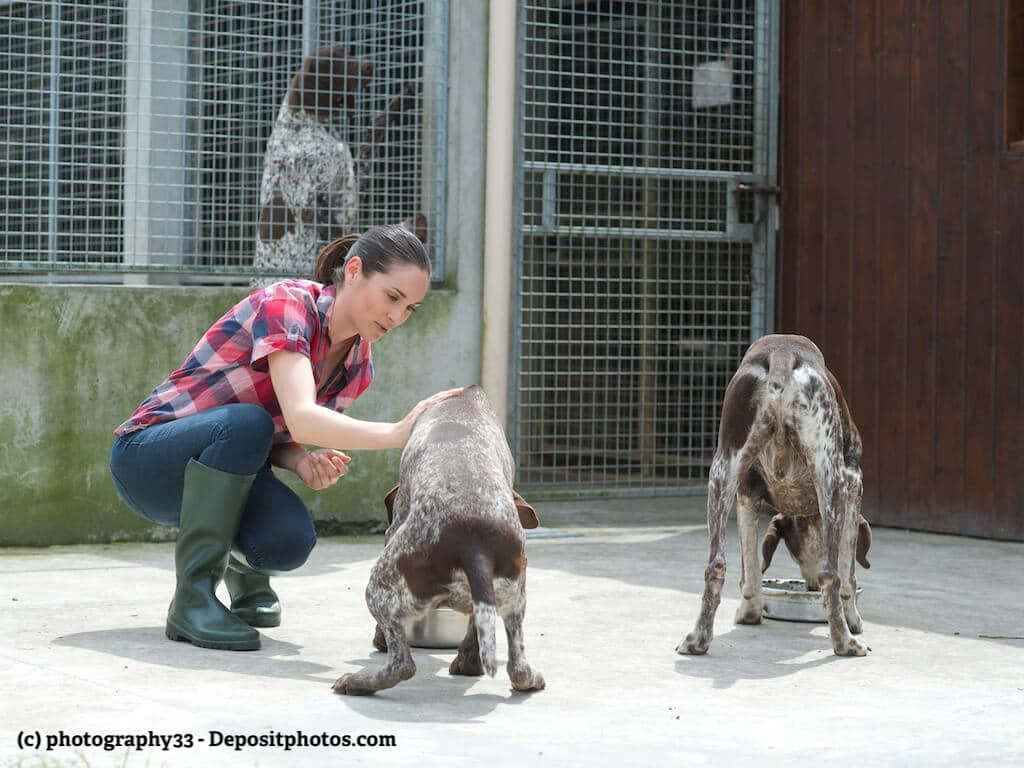 Eine junge Frau füttert in einem Tierheim zwei Hunde.