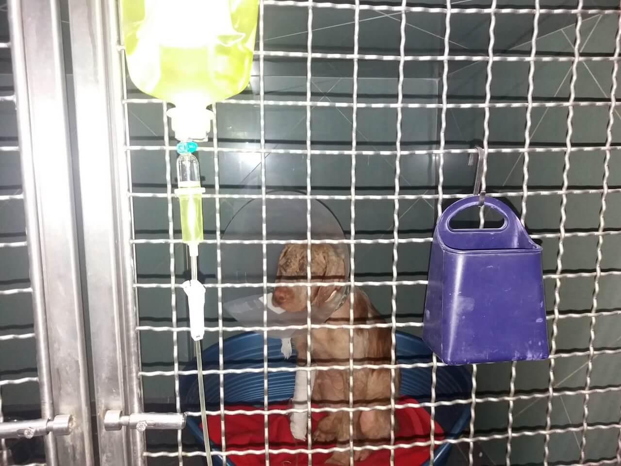 Hund beim Tierarzt Infusion