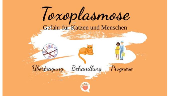Toxoplasmose Gefahr für Katze und Mensch