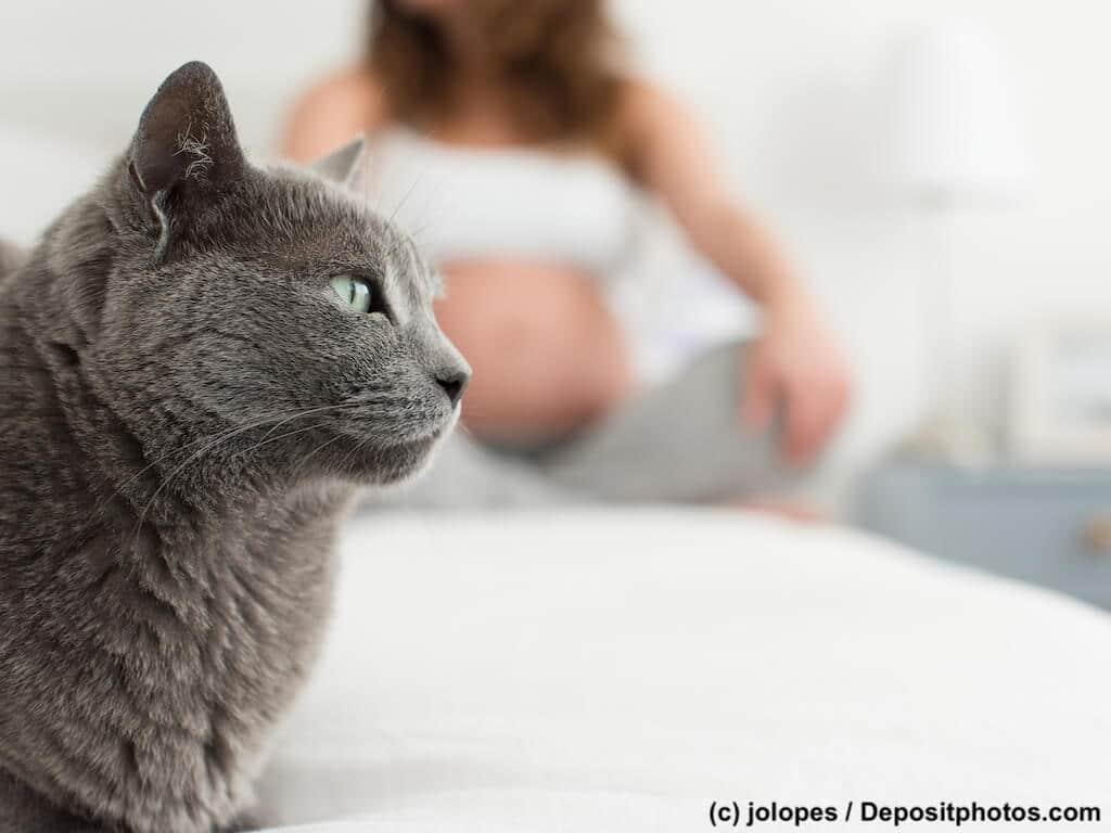 Nahaufnahme einer Katze im Hintergrund eine schwangere Frau im Schneidersitz