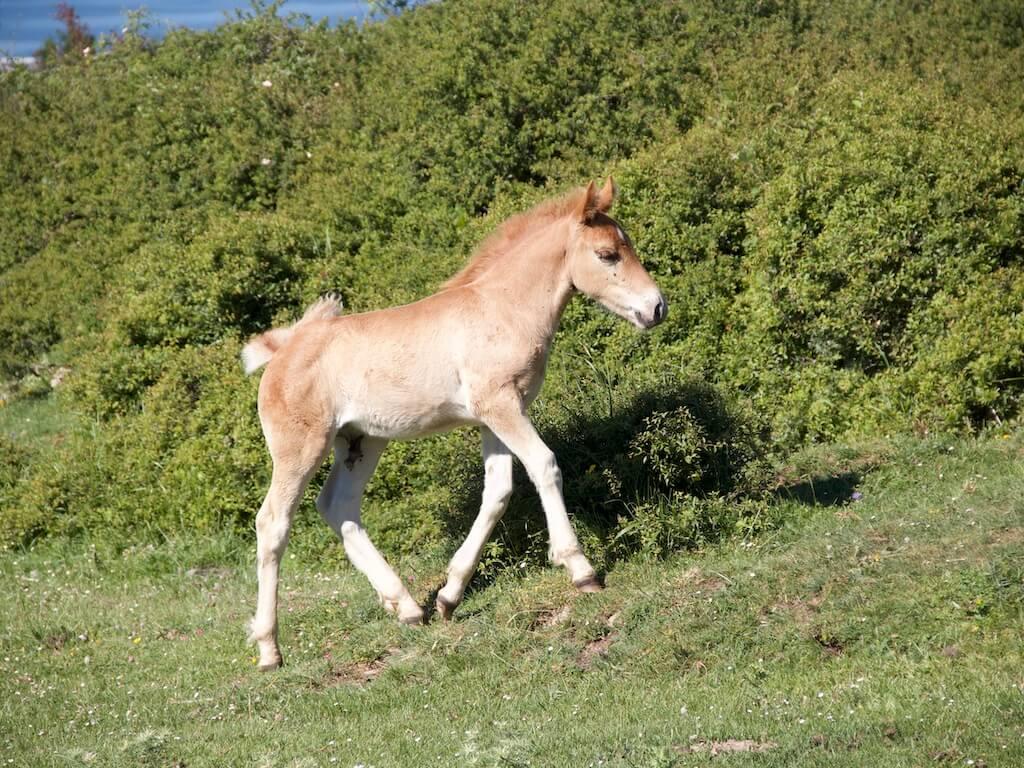 Traechtigkeitsversicherung Hilfe und Unterstützung für Pferde in der Schwangerschaft.