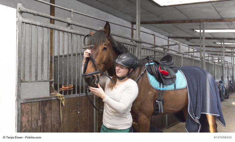 Frau trenst ihr Hannoverander Pferd in der Stallgasse mit dem Zaumzeug