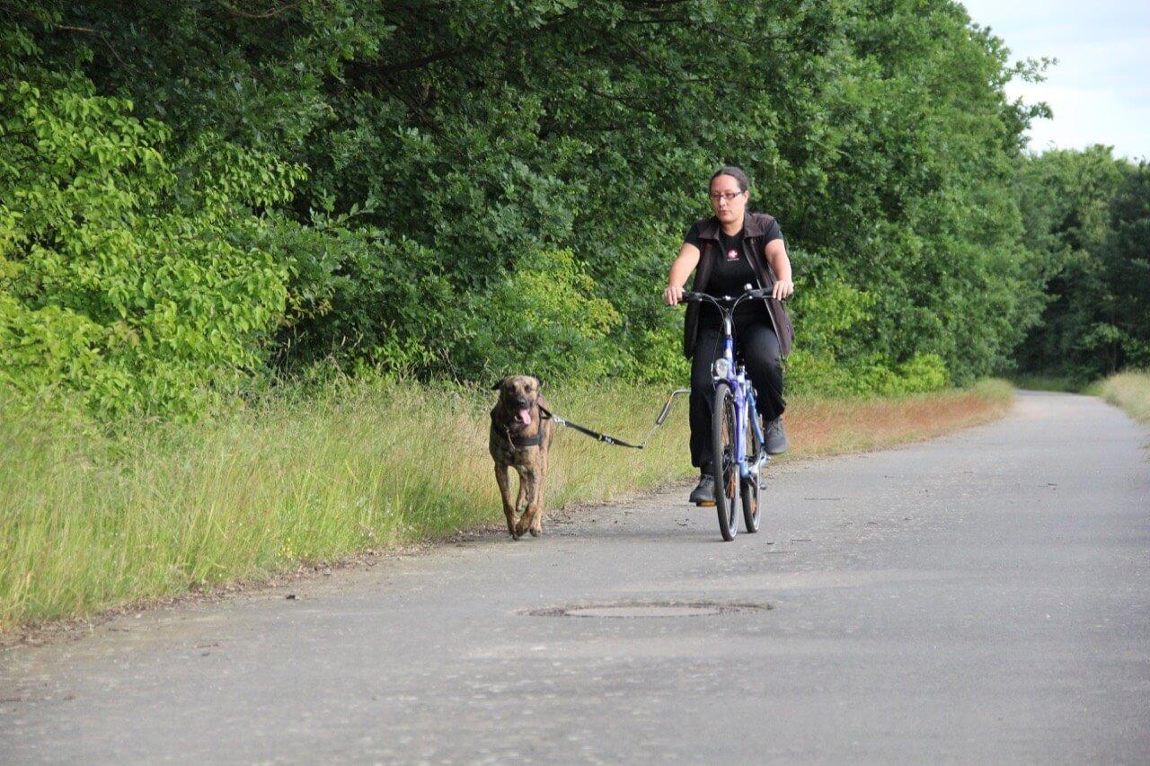 Sicheres Radfahren mit Hund