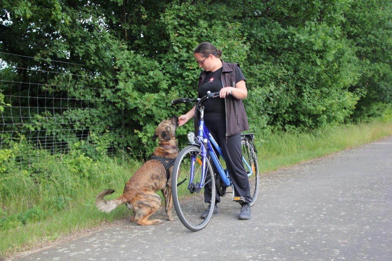 Übung Fahrradfahren mit Hund