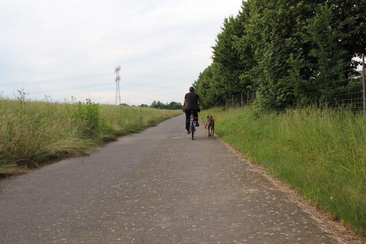 Hund und Radfahrer glücklich nebeneinander