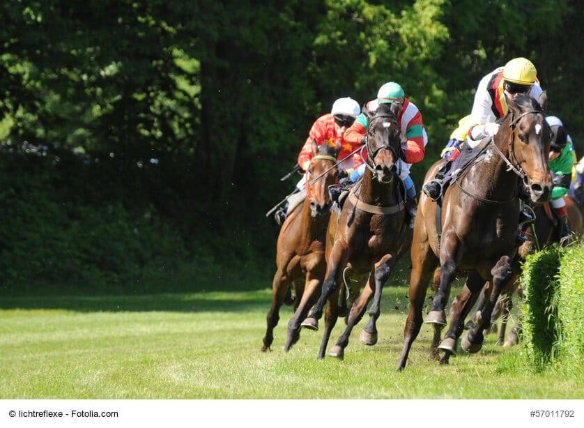 Perfekte Rennpferde - Vollblüter sind schnell und ausdauernd