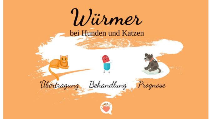 Wurmerkrankungen - Würmer bei Hunden und Katzen
