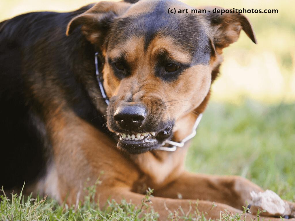Wütend Hund