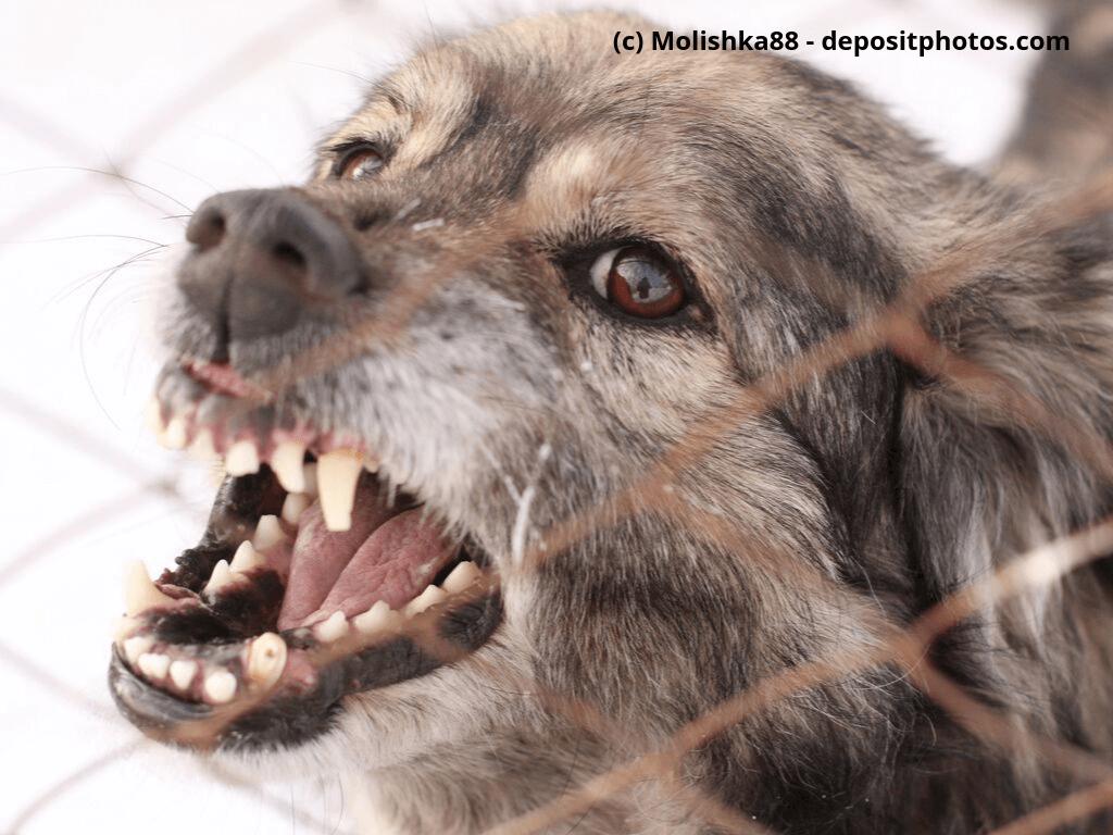 Wütender Hund in einem Stahlkäfig