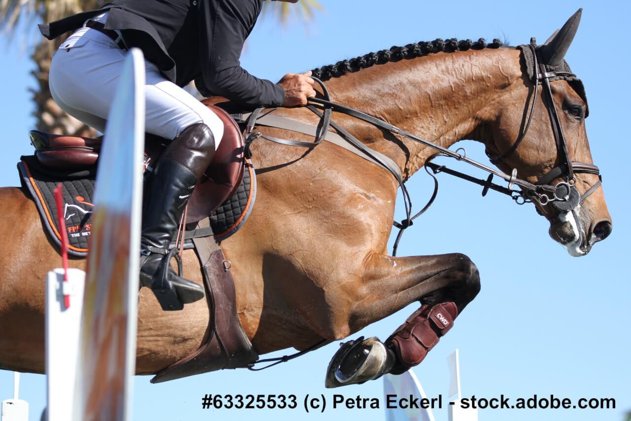 Ein Warmblüter springt mit Reiter über ein Hindernis