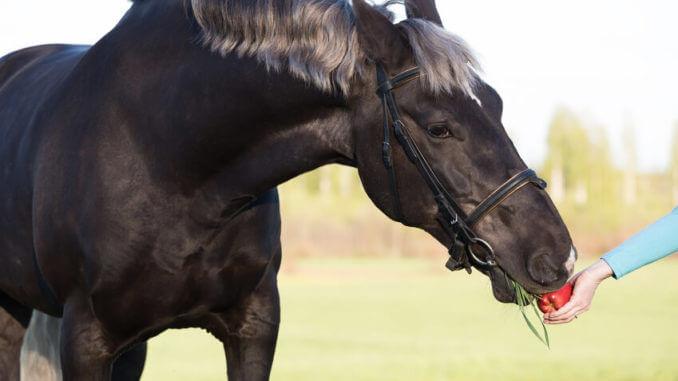 Gutes Pferdefutter ist für die Gesundheit Deines Pferdes das A und O
