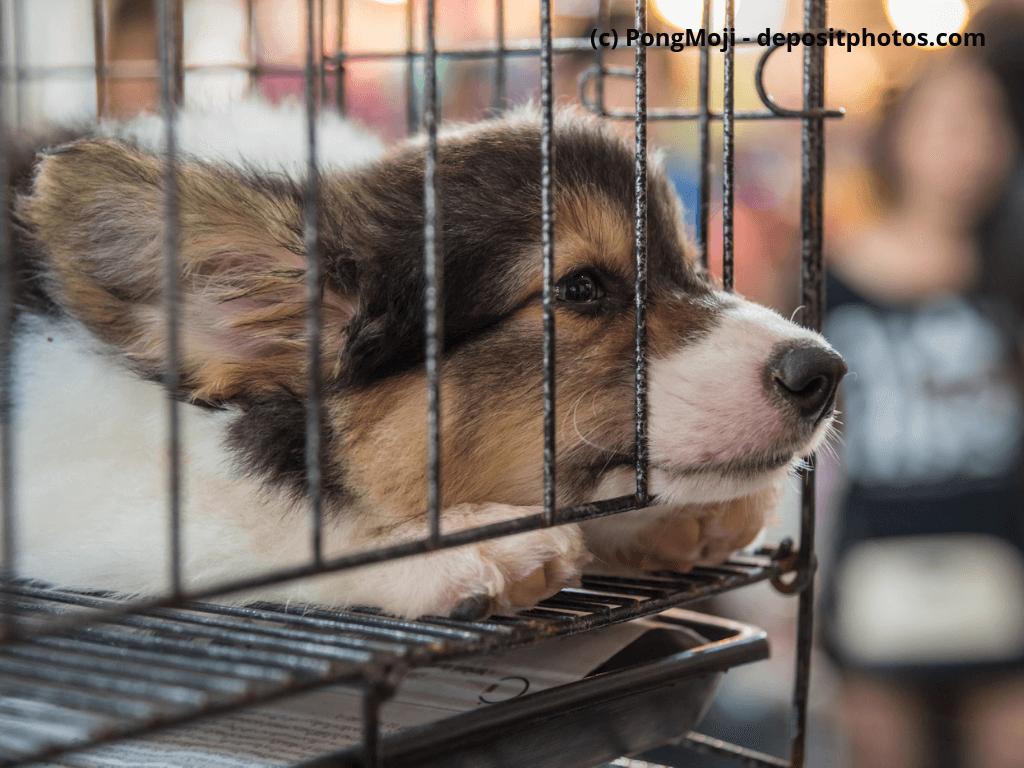 Welpen traurig und einsam im Käfig