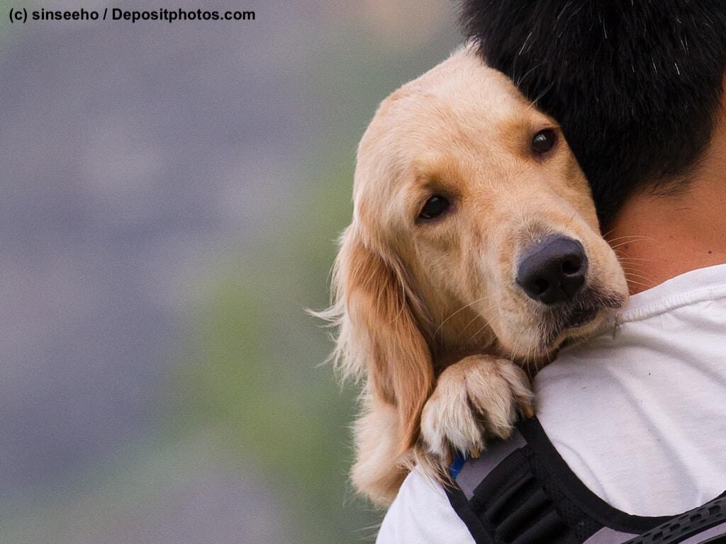 Hund schaut über die Schulter eines Mannes, der ihn auf dem Arm trägt