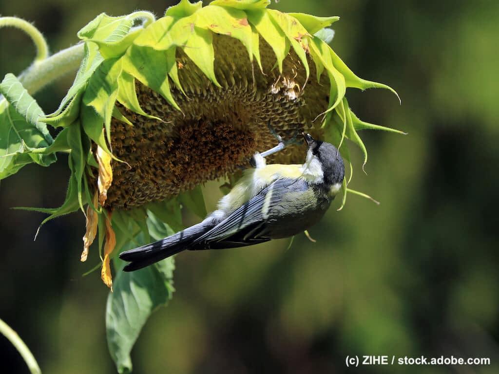 Natürlicher Garten für Wildvögel