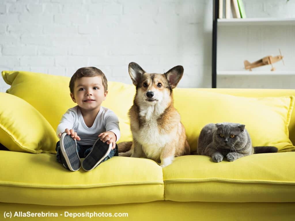 Würmer bei Hunden und Katzen, eine Gefahr!