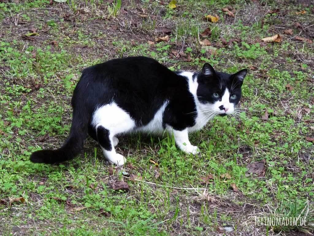 Freigänger Katzen richtig Entwurmen