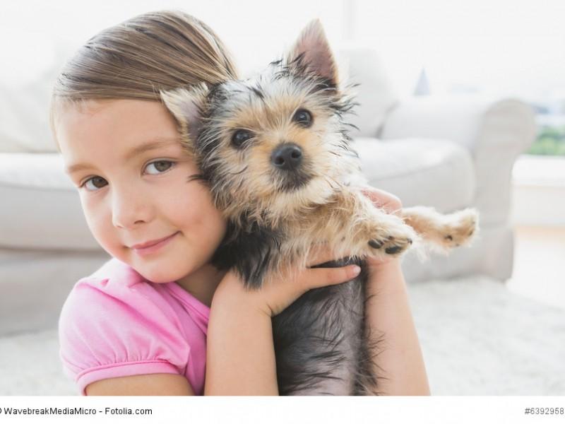 Yorkshire terrier steckbrief fci klasse wesen mehr