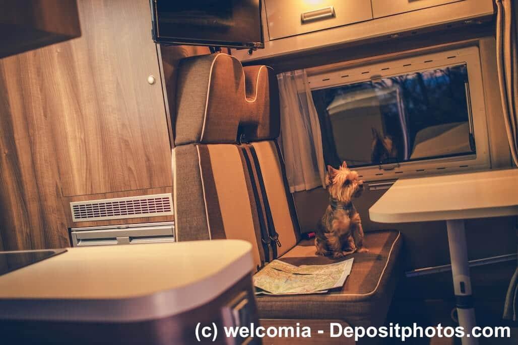 Yorkshire Terrier sitzt auf der Rückbank eines Wohnmobiles