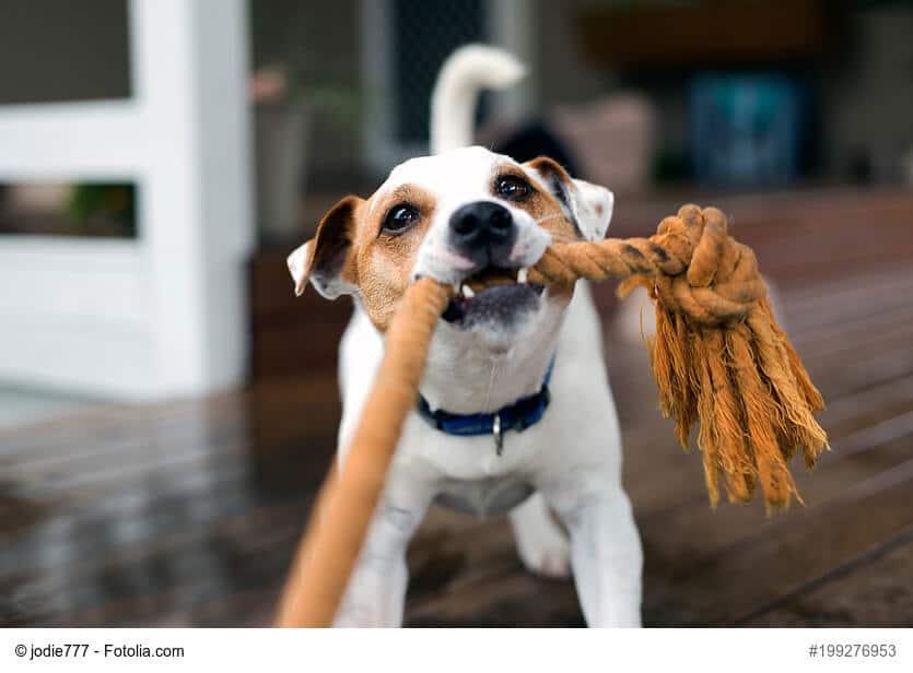Zieh und Zerrspiegel mit Hund