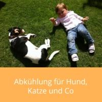 abkuehlung-sommer-hund