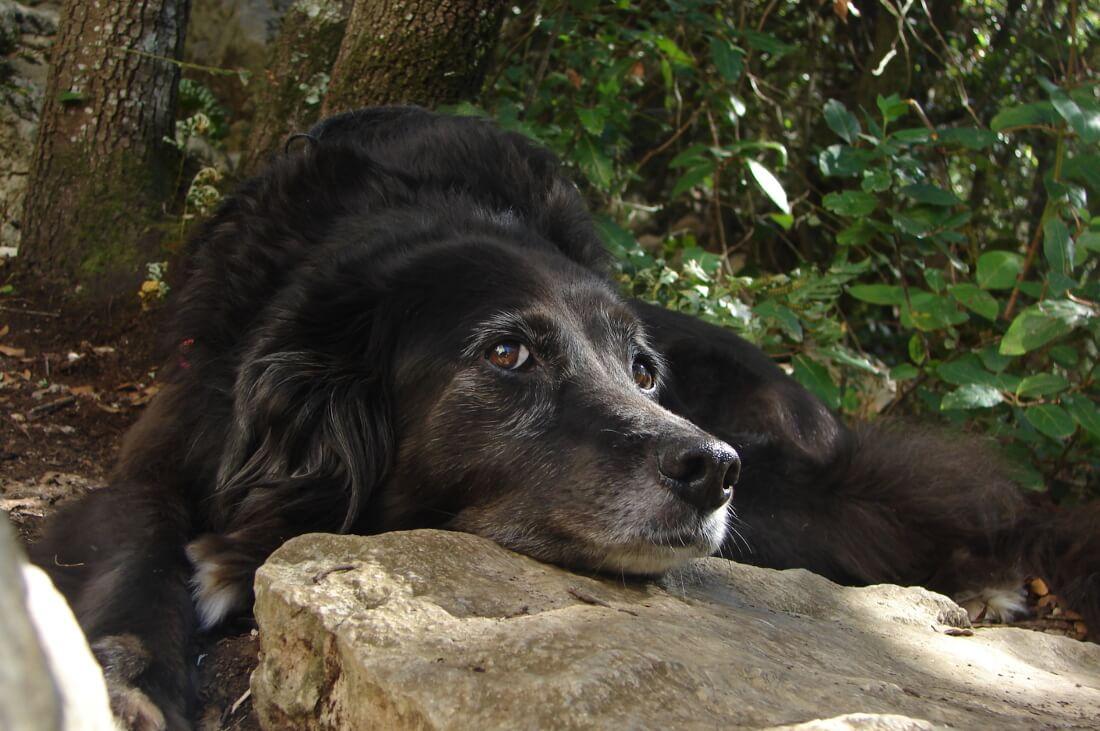 Schwarzer Mischlingshund liegt mit seinem Kopf auf einem Stein
